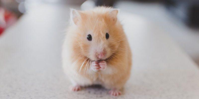 Välj rätt foder till ditt smådjur